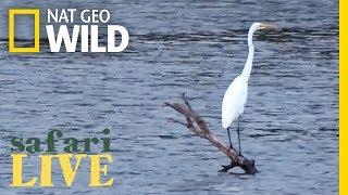 Safari Live - Day 135 | Nat Geo Wild
