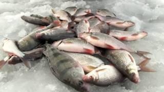 Рыбалка зимняя на горьковском море
