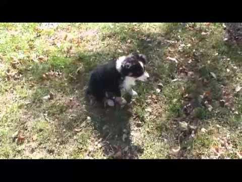 Dixie puppies Oct 27, 2013