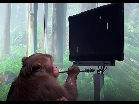 Neuralink Releases Video of Monkey Playing Pong With Its Mind
