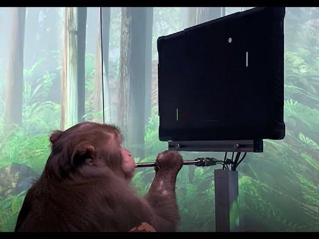 Парализованный человек и обезьяна смозговыми имплантами сразятся в«ментальный» пинг-понг