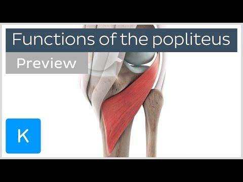 Medicament pentru repararea genunchiului