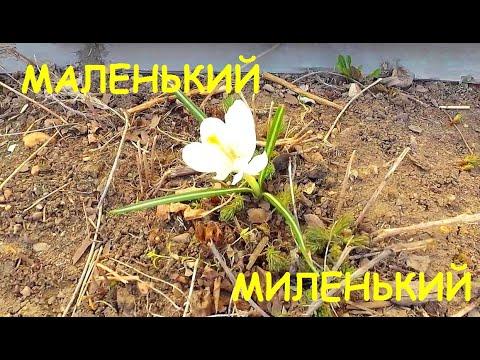 ВИТАМИНЫ ДЛЯ СОБАК! 05.05.21