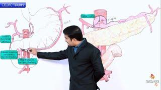 Anatomy of Celiac trunk / Celiac artery  - Origin , Course , Branches , Vascular supply