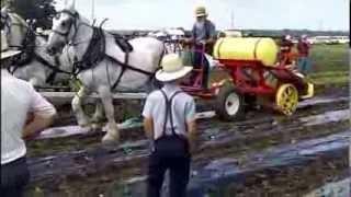 Produce Transplanter at The Horse Progress Days