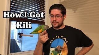 How I Got Kili My Senegal Parrot