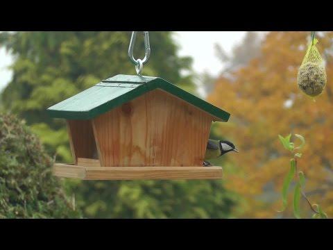 Vogelfutterhaus - bird feeder