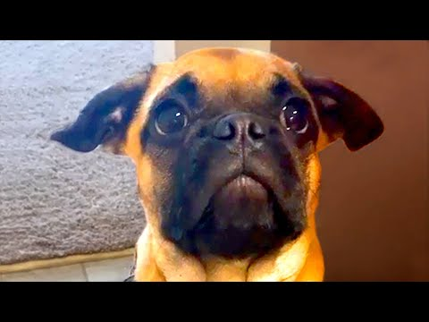 Silly Animals to Make You Smile | Funny Pet Videos
