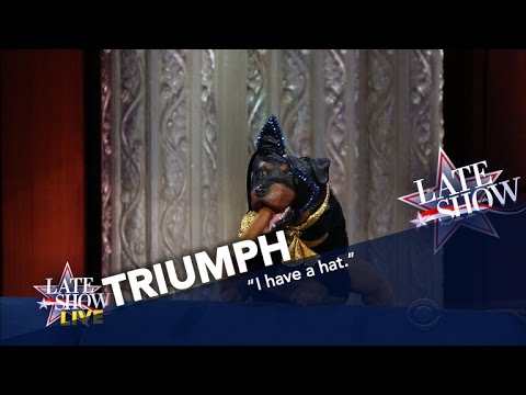 Triumph The Insult Comic Dog Explains Trump's Win