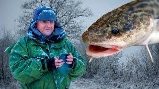 Налим ловля в ленинградской области