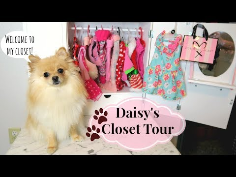 DOG CLOSET TOUR! Clothes & Accessories | 2018