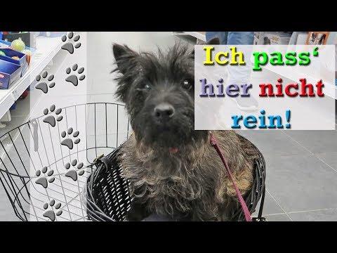 Hundefuttermodels bei Fressnapf | Neuer Fahrradkorb? | Hundekanal