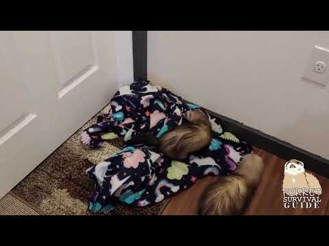 Ferret Care Basics - Ferretproofing