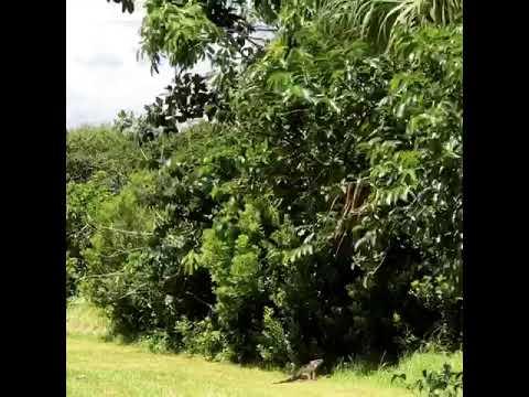 Video Of John Prince Park Campground, FL