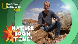 Petrified Forest National Park | NATURE BOOM TIME