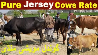 Pure Jersey Milky Cows Rates On Gondal Bakra Mandi Attock For Cattle Farming By My Life Channel