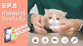 Muma Share EP.8 แนะนำการถ่ายพยาธิและป้องกันเห็บหมัดในขั้นตอนเดียว 👍🏻