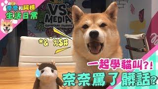 【柴犬Nana(奈奈)】一起學貓叫?奈奈罵了髒話?!