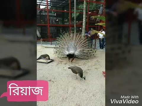 bangla xxx