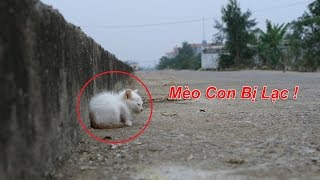 NTN - Nhặt Được Mèo Con Ngoài Đường (Meating a cut kitty out side of the road randomly)