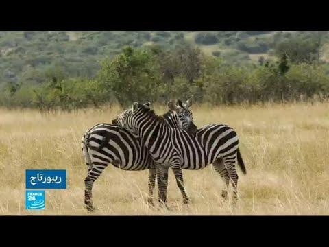 العرب اليوم - شاهد:جدل في كينيا بسبب مشاريع عمرانية في المنتزه الوطني