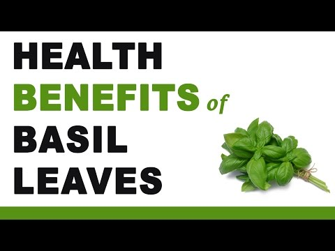 Video Health Benefits of Basil Leaves