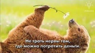 Мудрые ироничные фразы о жизни + забавные картинки  1