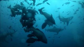 preview picture of video 'Close Call with a Bull Shark in Fiji'