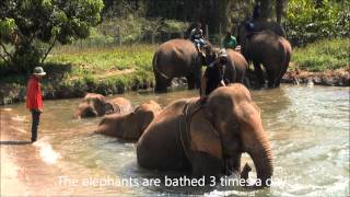 Baan Chang Elefant Reservat