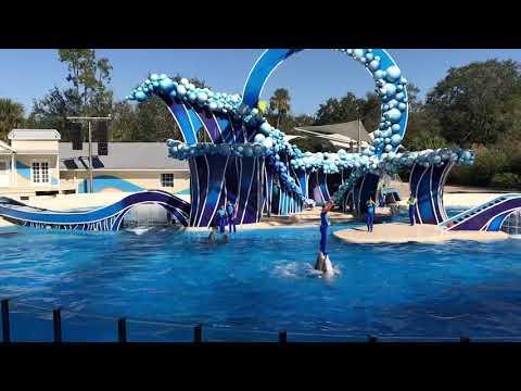 Dolphins shows at SeaWorld Orlando Florida 2018