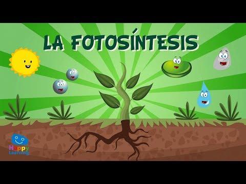 LA FOTOSÍNTESIS. ¿Cómo se alimentan las plantas?   Vídeos Educativos para Niños