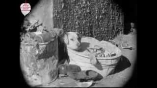 Having Fun, A Dog's Life -Charlie Chaplin