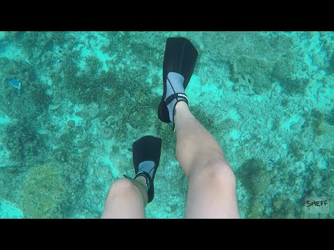 Snorkeling? Bring these with you