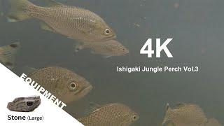 【アニマルFPV】4K 石垣島のマングローブとオオクチユゴイ