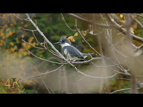 The 4K Guy Presents: The beautiful fall colours and wildlife of Canada