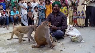 बंगाली जादूगर || बन्दर बंदरिया का खेल भाग- 1  बच्चो का भरपूर मनोरंजन चैनल को सब्सक्राइब जरूर करे