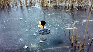 Рыбалка на флажки по первому льду