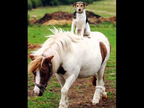 Brisboys - Pony For Sale (Original Mix)