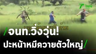 หมีควายฝาวงล้อมหนีออกจากไร่อ้อยแล้ว | 14-09-63 | ข่าวเที่ยงไทยรัฐ