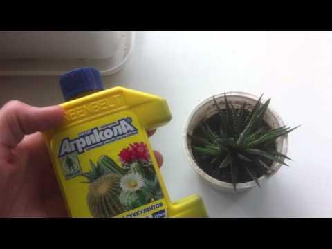 Удобрения длительного действия для цветов - Агрикола - состав, инструкция, отзывы