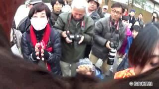 鷹匠・石橋美里さん、華麗な技披露(2017年1月20日佐賀新聞ニュースS)
