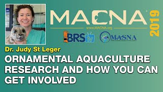 Dr. Judy St. Leger: How hobbyists can help grow the ornamental aquaculture research. | MACNA 2019