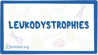 Leukodystrophy - causes, symptoms, diagnosis, treatment, pathology