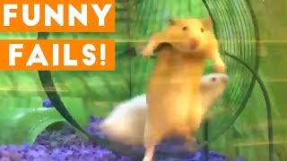 Funniest Animal Fails January 2018 Compilation   Funny Pet Videos
