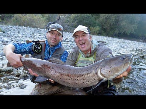 Fly Fishing for Huchen (Hucho, Danube Salmon)
