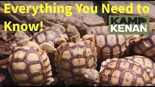 The ULTIMATE SULCATA Tortoise Care INSTRUCTIONS : Kamp Kenan S3 Episode 34