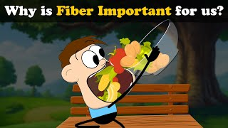Why Is Fiber Important For Us? | #aumsum #kids #science #education #children