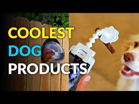 These Are The Coolest Dog Products Ever!