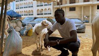 Dudu fait des videos et les moutons qui parlent
