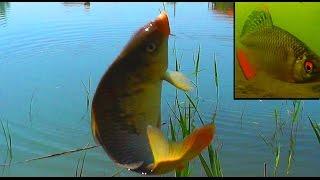 Озеро для рыбалка